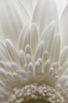Macro photographer Damon Clarke specializes in closeup photography. Close Up Photography, Nature Photography, Inspiring Photography, Flower Photography, Macro Photographers, Purple Painting, Tiny World, Damon, Soft Colors