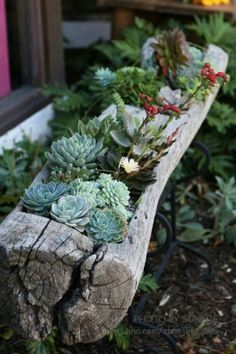 Succulents in landscapers timber