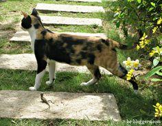 Cat & lizard