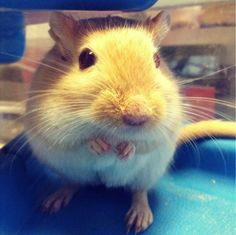 Flash the gerbil looking gerbil-tastic! Have you got a great pic of your gerbil? We'd love to see it!