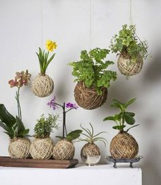 DIY: como fazer um Kokedama para sua casa