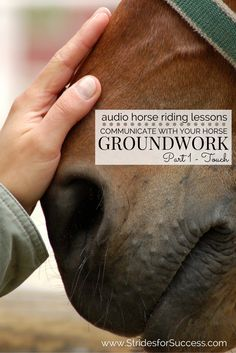 How much time do you spend strengthening your relationship with your horse while on the ground?  Many riders only think 'riding' when they think of communicating with their horse, however there are many other ways you can begin to not only create a stronger sense of trust but also to improve your horse's training.