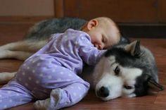 やっぱり癒されるなぁ〜!! 無邪気な子どもを温かいまなざしで見守る動物たち