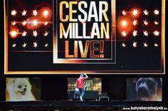Cesar Millan Live Budapest - A kutyadoki magyar címeres