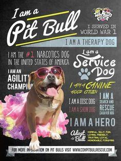 Pitbulls #pittie #pitbull #bslsucks #hero #servicedog #narcotics #agility