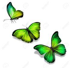 estampados de flores y mariposas en amarillo - Buscar con Google