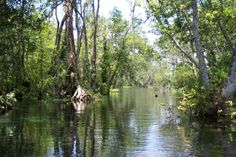 Canoeing in Silver River State Park