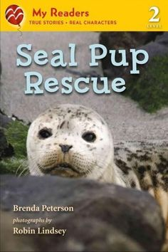 Seal Pup Rescue (My Readers. Level 2)