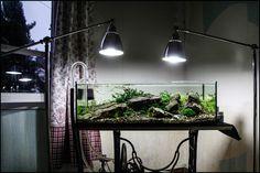 Local River Déménagement  d'un aquarium | Le Journal de l'aquascaping