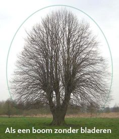 Als een boom zonder bladeren