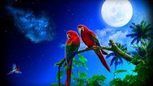 A parrot's moon art nebula trees macaws