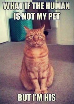 #funny #cat #meme