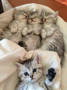 awwww! Cute! — 3 cute little kittens and a…..uhhh (Source:...