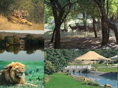 Ranthambore is a popular national park of Rajasthan that serves as a popular tourist destination in India. The land is blessed with rich wildlife and has been fascinating tourists from years. The land is soon gaining ground as a natural tourist spot amidst national tourism.