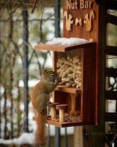 Squirrel Feeder Diy, Squirrel Home, Wood Bird Feeder, Bird House Feeder, Bird Feeder Craft, Garden Bird Feeders, Wood Projects, Woodworking Projects, Wood Crafts