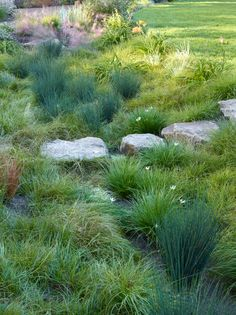 Rain garden with grass and sedge! Plus stone walkpath Regengarten mit Gras und Segge! Plus Steinwand Natural Landscaping, Pond Landscaping, Tropical Landscaping, Landscaping With Rocks, Backyard Water Feature, Ponds Backyard, Rain Garden Design, Prairie Garden, Natural Pond