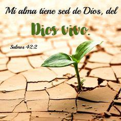 """Mi alma tiene sed de Dios – """"TAÑENDO CUERDAS"""" AL SEÑOR (XII) LEA: Salmos 42:1-5 David se hallaba en un momento difícil, y aunque el evento específico a este Salmo es desconocido, podemos ver la realidad en la que se encontraba el salmista, tenía sed de Dios (v. 2). El salmista se hace una pregunta retrógrada a sí mismo: """"¿Cuándo vendré, y me presentaré delante de Dios?"""" (v. 2); y aunque esa respuesta es sencilla, parecería que en su mente esa posibilidad no estaba tan cercana. Muchos…"""