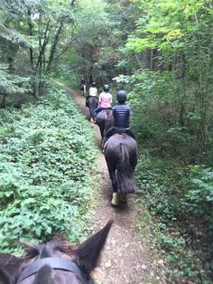 Wicklow EquiTours. Horse riding Ireland www.stable-mates.com