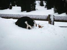 Well deserved relaxing Sunday  . . . #jura #myvaud #myromandie #dog #snow #InLoveWithSwitzerland #Suisse #Switzerland #SwitzerlandWonderland #bestofswitzerland #exploreSwitzerland #super_switzerland #swissspots #switzerland_vacations #switzerlandpictures #relax #chien #winter #explore #neverstopexploring Best Of Switzerland, Never Stop Exploring, Vacations, Wonderland, Sunday, Relax, Wellness, Snow, Explore