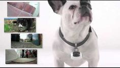 See what your dog does while you're gone - here's a fun way to record your dog's daily adventures!
