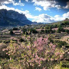 Floración de amendros en Alpatró, La Vall de Gallinera