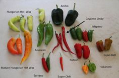 Peppers - Sweet and Heat! : Yard and Garden News : University of Minnesota Extension