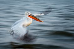 World Photography, Ocean Photography, Photography Awards, Wildlife Photography, Action Photography, Vine Snake, The Art Of Flight, Nature Story, Natural Ecosystem