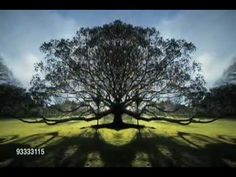 Abraham-Hicks: Now we are Free ♥♥♥   WOW!  Beautiful!  sls