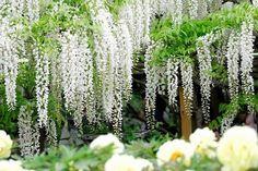 japan_garden.jpg (568×379)
