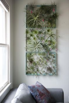 12 Elegant Ways To Bring Air Plants Into Your Home // This frame is a great way to display all of your air plants and makes for a beautiful living piece of artwork.