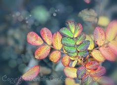 Fine Art Photo PrintColorful Autumn Leaves by ThePDXPhotographer, $30.00
