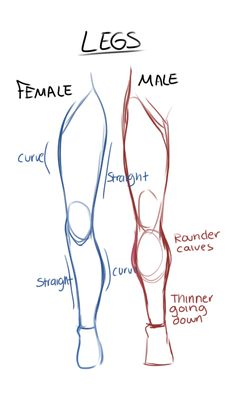 Drawing Tips - Imgur -legs male vs female