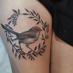 Female fairy wren for Tori!  xxx Thankyou for today!