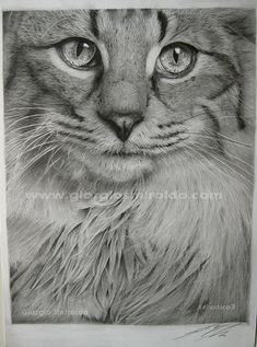 Animal Pencil Drawing 24