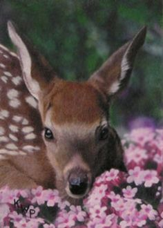 Fawn in Pink