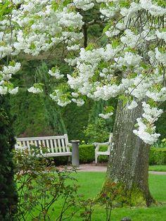 white garden Magic in the Treetops THE PRIME MINISTER, SHRI NARENDRA MODI WITH THE NARI SHAKTI AWARDEES, IN NEW DELHI. PHOTO GALLERY  | PIBCMS.NIC.IN  #EDUCRATSWEB 2020-03-19 pibcms.nic.in https://pibcms.nic.in/WriteReadData/Banner/2020/Mar/T202003093426.JPG