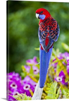 Make one special photo charms for your pets, compatible with your Pandora bracelets. Top 10 Most Rare Animals Tropical Birds, Exotic Birds, Exotic Pets, Tropical Animals, Kinds Of Birds, All Birds, Colorful Animals, Colorful Birds, Rare Animals