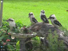 Beautiful Birds, Ducks, Owl, Animals, Animales, Animaux, Owls, Animal, Animais
