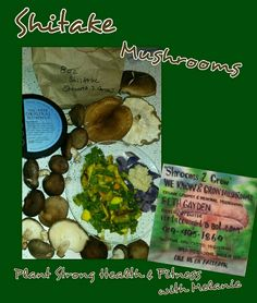 Who loves Shitake Mushrooms? Me, Me, Me.... Dinner steam fried veggies featuring shitake mushrooms, split peas, kale, zucchini, kale; seasoned with Tumeric, thyme, and garlic.  Also some baked purple potato topped with oil-free hummus...yummm. #shrooms2grow #shitakemushrooms #tumeric #purplepotatoes #vegan #glutenfree #plantbased #oilfree #rootshummus #cleaneating #plantstronghealthandfitnesswithmelanie
