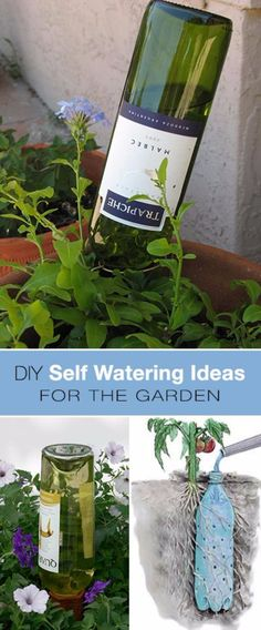 DIY Landscaping Hacks - Wine Bottle Self Watering DIY For Your Garden - Easy Ways to Make Your Yard and Home Look Awesome in Fall, Winter, Spring and Fall. Backyard Projects for Beginning Gardeners and Lawns - Tutorials and Step by Step Instructions http://diyjoy.com/landscaping-hacks