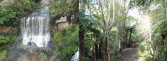 Mokoroa Falls - Goldies Bush (Bethells Beach)