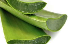 The plant Aloe vera has been used historically in various traditional cultures for its health benefits. Surprising Aloe Vera Benefits For Health Aloe Vera Gel, Gel Aloe, Aloe Vera For Hair, Listerine, Natural Aloe Vera, Natural Skin, Home Remedies, Natural Remedies, Creme Anti Age
