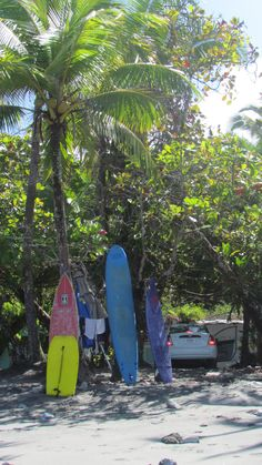 sun. surf. beach.