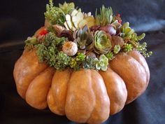 Halloween is tomorrow, and there is still time to grab a few funky pumpkins or pretty squashes before the farm stands disappear.  Making a pumpculent (pumpkin/succulent) centerpiece is easy, and since you don't cut into the pumpkin, it will last as long as all the way to next summer, when you can transplant your succulents to something a bit more seasonal.