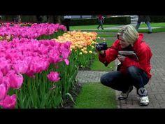 VIDEO: Keukenhof Gardens and Tulip Fields Tour from Amsterdam #travel