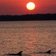 Dolphins at Sunset on #TybeeIsland, Georgia.  [Photo by @jrsmith48] #VisitTybee