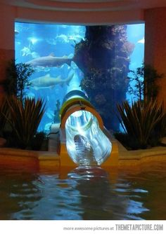 Shark water tank slide in Vegas at Golden Nugget! It's a must to cross off my fear of sharks on Bucket List!