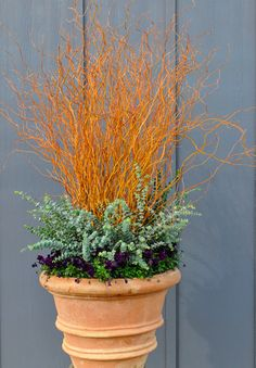 Scarlet Curls willow (Salix matsudana x S. alba 'Scarlet Curls') stems paired with spiral eucalyptus (Ecualyptus ssp.) and purple pansies (V...
