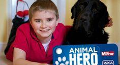 En lice pour décrocher l'Animal Hero Award 2014, un prix remis par la RSPCA (la SPA britannique) en partenariat avec le Daily Mirror, Sox mérite sans aucun doute son titre de héros. A sa façon, ce Labrador croisé Golden Retriever ...