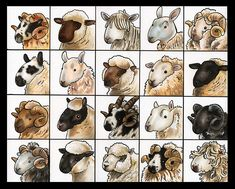 20 breeds of sheep; 1) Scottish Blackface 2) Oxford Down 3) Lincoln Longwool 4) Blue faced Leicester 5) Merino 6) Kerry Hill 7) Border Leicester 8) Dorset Down 9) Romney 10) Suffolk 11) Hill Radnor 12) Clun Forest 13) Jacob 14) Cheviot 15) Black Welsh Mountain 16) Herdwick 17) Hampshire 18) Southdown 19) Rough Fell 20) Dartmoor